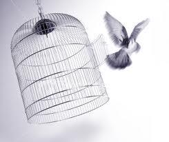 bird_flying